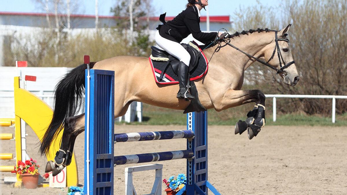Фотоотчёт с чемпионата и первенства Тюменской области по конному спорту