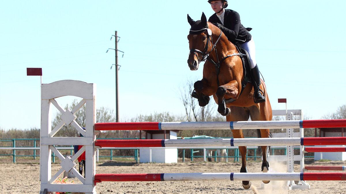 По коням. В Боровском завершились чемпионат и первенство Тюменской области по конному спорту